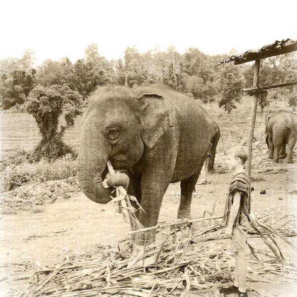 Neulich bei den Elefanten