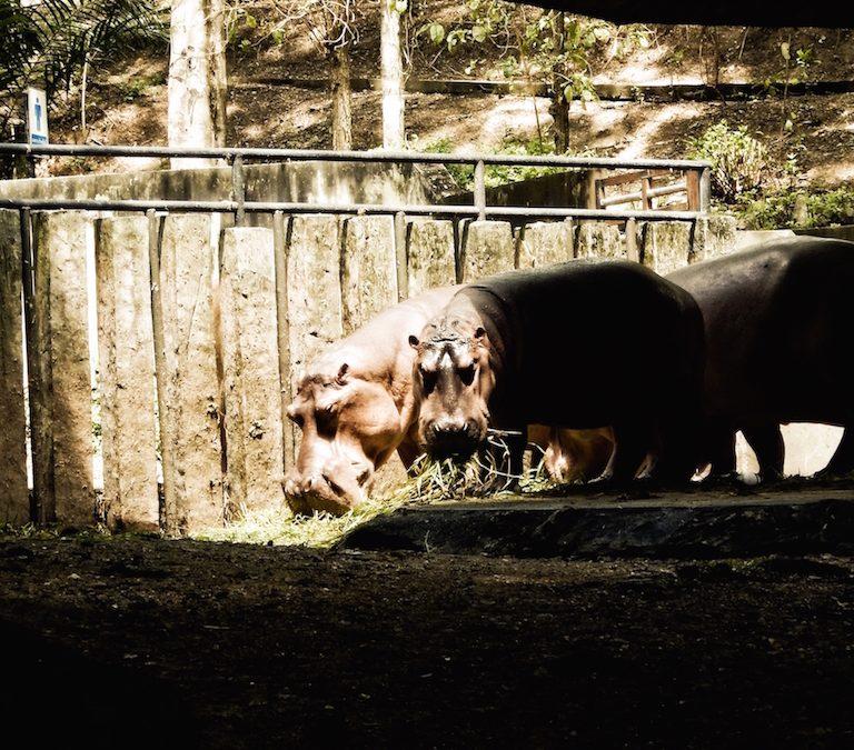 Eindrücke aus dem Zoo