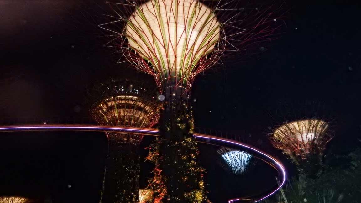 gardens-baeume-bei-nacht