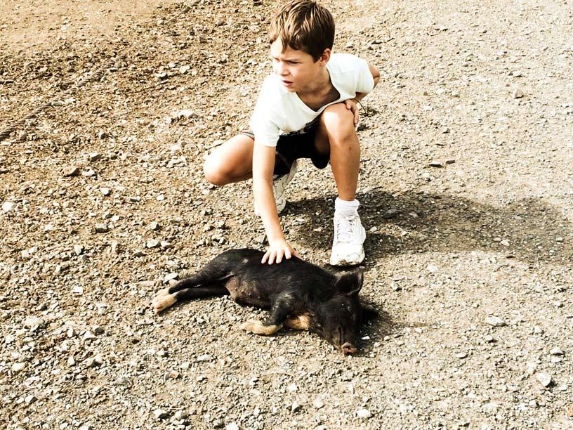 Leo-der-Schweineflüsterer