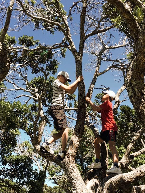 Pause-im-Baum