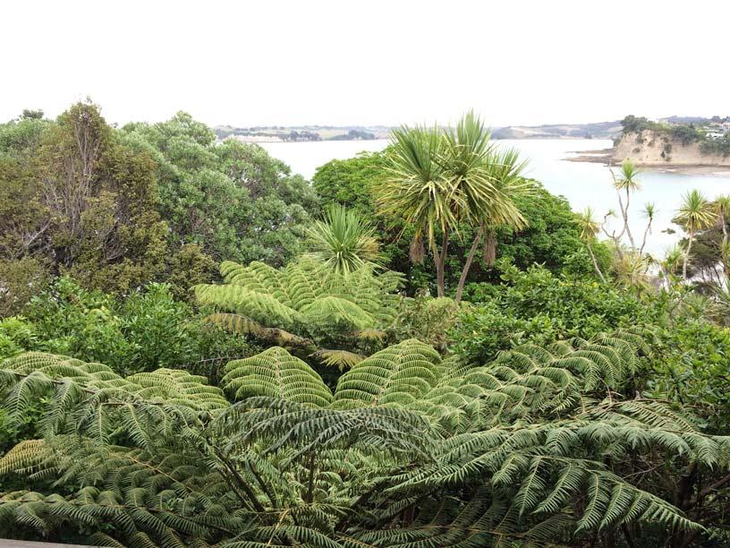 Whangaporaoa-,-Blick-in-den-Garten